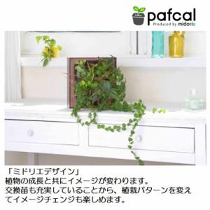 土を使わない壁掛け観葉植物 ミドリエデザイン GreenFRAMEローズ17A4