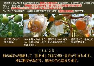 柿 かき カキ 送料無料 和歌山産 紀の川柿 『黒あま』 4〜5玉 約1キロ