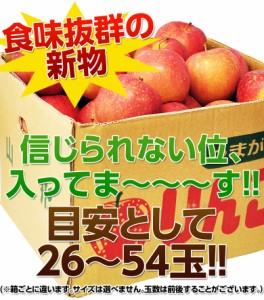 りんご リンゴ 送料無料 山形産 訳あり サンふじ バラづめ 約10キロ 26〜54玉 (梱包込重量)