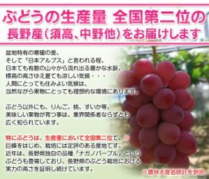 ブドウ ぶどう 葡萄 送料無料 長野県産 赤ぶどう 『クイーンニーナ』 2房 計約900g