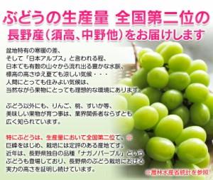 ブドウ ぶどう 送料無料 長野県産 シャインマスカット&巨峰 各1房 合計約800g
