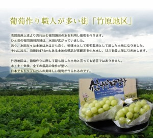 ブドウ ぶどう 長野県産 浦野正和さんの「完熟シャインマスカット」 化粧箱 2房 計約1キロ 常温・産地直送