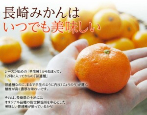 みかん ミカン 送料無料 【糖度12度以上】 長崎県産 味ロマン 約2.5キロ (2S〜M)  常温