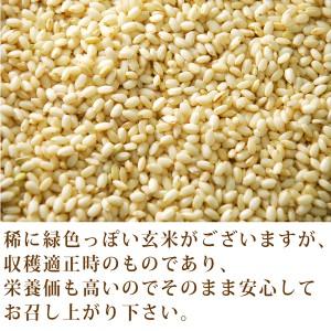 【30年産 新米】無農薬 もち米 玄米 3kg 無農薬・無化学肥料・千葉県産 ヒメノモチ