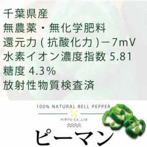 ピーマン100g (無農薬・無肥料)千葉県産 還元力-7mV