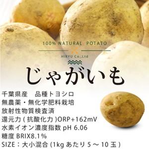 じゃがいも トヨシロ 1kg 無農薬・無化学肥料・ヴィーガンレシピ付き! 千葉県産・放射性物質検査済・還元力(抗酸化力)+162mV
