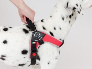 中型犬・大型犬用ハーネス トレ・ポンティ Brio(ブリオ)XL