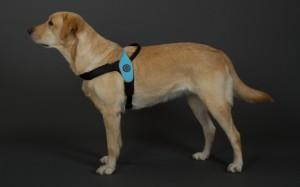 犬 ハーネス 中型犬・大型犬用 トレ・ポンティ Primo(プリモ) M