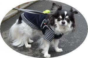 犬 ハーネス 小型犬用 トレ・ポンティ Fibbia(フィッビア) アジャスタブルタイプ 1サイズ