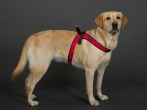 中型犬・大型犬用ハーネス トレ・ポンティ Sporza(スポルツァ)4.5サイズ