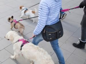 犬 ハーネス 中型犬・大型犬用 コンフォートウォークプロハーネス L ドッグコペンハーゲン
