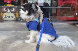 小型犬用 EZYDOG ゼロショックライト リード 180cm