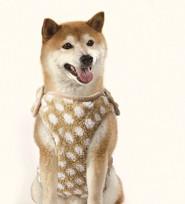 マルカン ぬくぬく着る毛布 M 中型犬用 わんぱくペット用 動物用