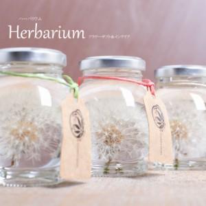 ハーバリウム Herbarium たんぽぽ球体プリザ—ブドフラワーやドライフラワーを液体の入ったビン
