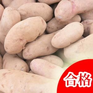 ノーザンルビー 種芋 ジャガイモ じゃがいもの種 1kg【検査合格済】【サイズ混合】
