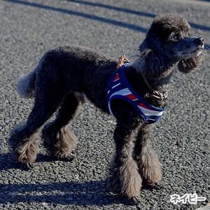 【メール便】リードッグ パステルボーダー ソフトハーネス SM ネイビー/ピンク/ミント 中型犬用 ハーネス ペット セーフティー 安心 安全