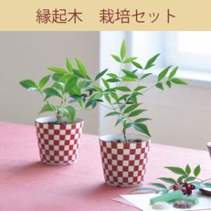縁起木栽培セット 南天・千両 発芽保障 なんてん せんりょう 聖新陶芸 和風 市松模様の陶器