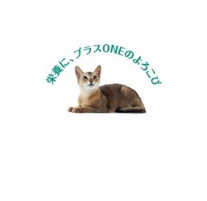 ピュリナ ワン キャット 長生き猫の健康維持 15歳以上 チキン 2.2kg