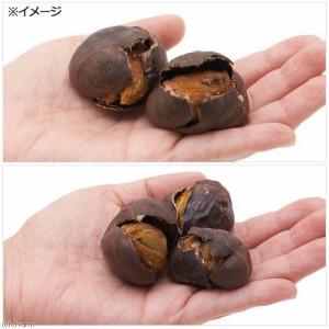 長野県小布施産 極上大粒焼き栗 5個 小動物のおやつ 小鳥 ハムスター 国産 無添加 無着色 (ハムスター 餌)