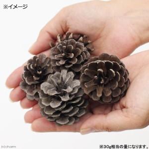 長野県産 松ぼっくり 30g クリスマス (ハムスター 餌)