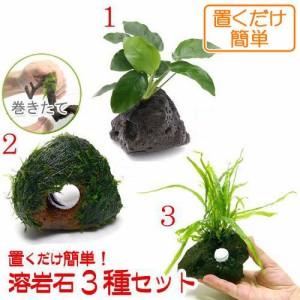 (水草 熱帯魚)置くだけ簡単 水草付き溶岩石3種セット