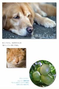FWD:グリーントマトコンディショナー【5000ml】