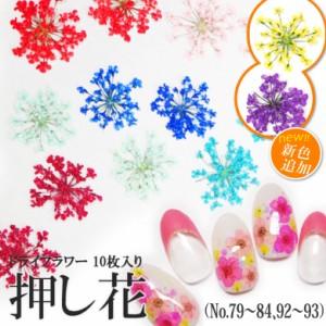 【79-84・92-93】ケース入り 押し花(ドライフラワー)10枚入り  ネイル・ レジン