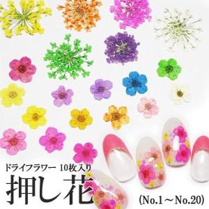 【1-20】ケース入り 押し花(ドライフラワー)10枚入り ネイル・ レジン・レースフラワー