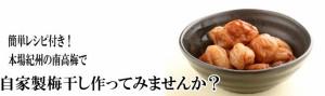 【送料無料】完熟青梅 ≪南高梅≫ Lサイズ 10kg 和歌山産【梅干し用】予約注文