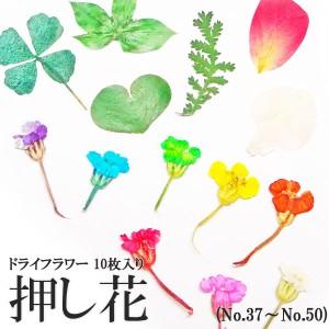 【37-50・164】ケース入り 押し花(ドライフラワー)10枚入り ネイル・ レジン・ハンドメイド