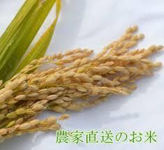 晴れの国岡山で穫れたお米10kg【10kg×1袋】 送料無料 最安値。北海道・沖縄は756円の送料がかかります。 米