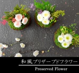 【送料無料】苔玉アレンジ プリザーブドフラワー 母の日