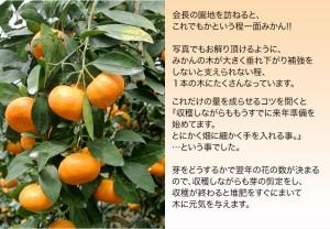 みかん 佐賀県産 JAからつ「ハウスみかん」Mサイズ 約1.2kg(11〜15玉)※常温