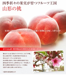 桃 もも モモ 白桃 送料無料 山形県産 白根白桃 約5キロ (10〜20玉)