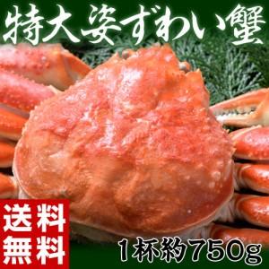 ズワイ カニ 蟹 カナダ産 『特大姿ずわい蟹』 約750g ※冷凍・送料無料