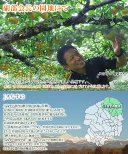 梨 なし 送料無料 栃木県那須野産 「あきづき梨」 約5キロ 大玉限定! (6〜12玉) 優〜秀品  常温