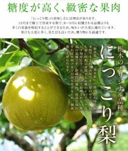 梨 ナシ 和梨 送料無料 栃木県産 にっこり梨 約5キロ (超大玉4〜6玉) 秀〜優品