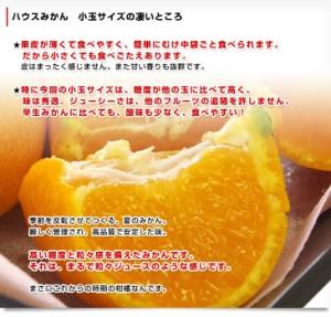 佐賀県より産地直送 JAからつ ハウスみかん 3Sサイズ  約2キロ(45から50玉) 送料無料