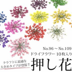 ケースなし 押し花 ドライフラワー (96-109) 10枚入り 大きめサイズ