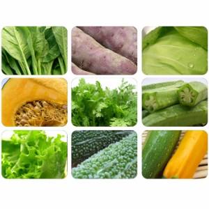 送料無料野菜セット【新鮮採れたて野菜詰め込み】岩沼みんなの家のみんなの直売!野菜/農家さん直売所/8品以上