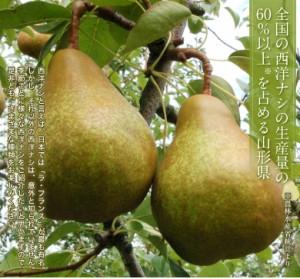 送料無料『西洋梨 オーロラ』 山形県産 約2kg×2箱 (1箱:6〜10玉入)