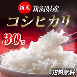 米 お米 29年産新潟県産コシヒカリ10kg【5kg×2袋】  送料無料 北海道・沖縄は700円の送料がかかります。