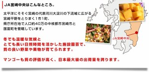 送料無料 宮崎県より産地直送 JA宮崎中央 宮崎完熟マンゴー 太陽のタマゴ 2L×2玉  (350から459g ×2玉)産直だより
