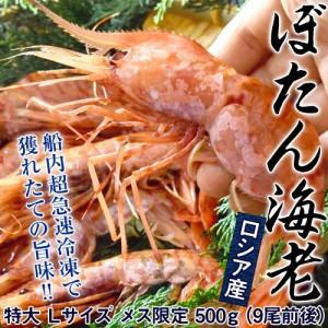 ロシア産 「ぼたん海老」 Lサイズ メス限定 500g(9尾前後) ☆