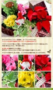季節のおまかせ花鉢とグリーンの寄せ入れSサイズ【フラワーバスケット 誕生日 プレゼント 母 祖母 花 お祝い 贈り物 お見舞い】
