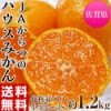 中元 ギフト 柑橘 みかん JAからつ 小玉みかん 2...