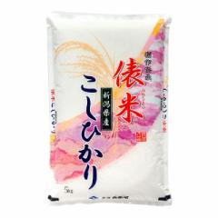 米 お米 精米 新潟県産 5kg こしひかり 令和3年産