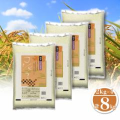 米 お米 精米  8kg(2kg×4) コシヒカリ 福井県産 令和3年産