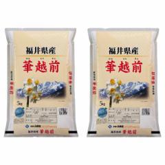 米 お米 精米  10kg(5kg×2)華越前 福井県産 令和3年産