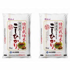 米 お米 令和2年産 精米 10kg(5kg×2)特別栽培米 こしひかり 丹波産